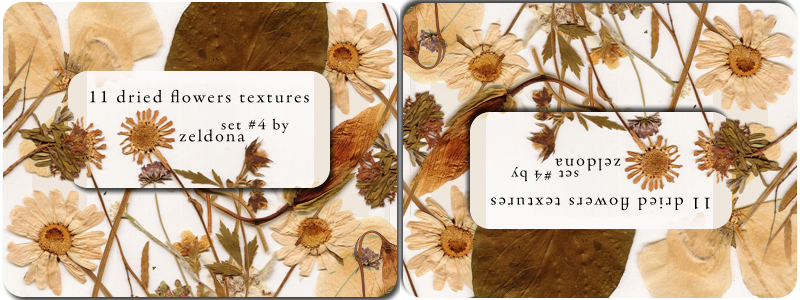 11 dried flowers textures